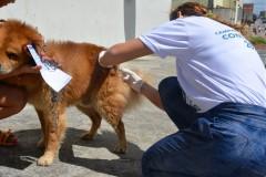 Centro de Zoonoses prevê imunizar mais de 23 mil animais no Dia D de vacinação antirrábica
