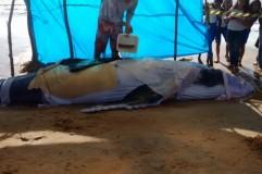 Moradores armam tenda para proteger filhote de baleia encontrado no Pontal do Ipiranga