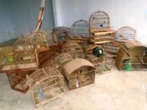 PM resgata 27 aves silvestres mantidas em cativeiro no bairro Interlagos