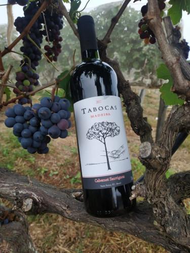 Vinho de Santa Teresa é medalha de ouro em prêmio nacional